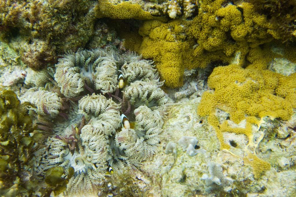Clownfische auf Apo Island – Endlich Tauchen lernen | SOMEWHERE ELSE