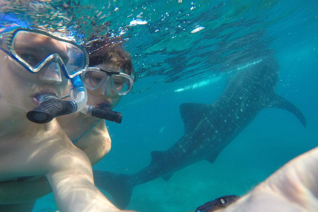 Schnorcheln mit Walhai in Cebu – Weltreise zu zweit | SOMEWHERE ELSE