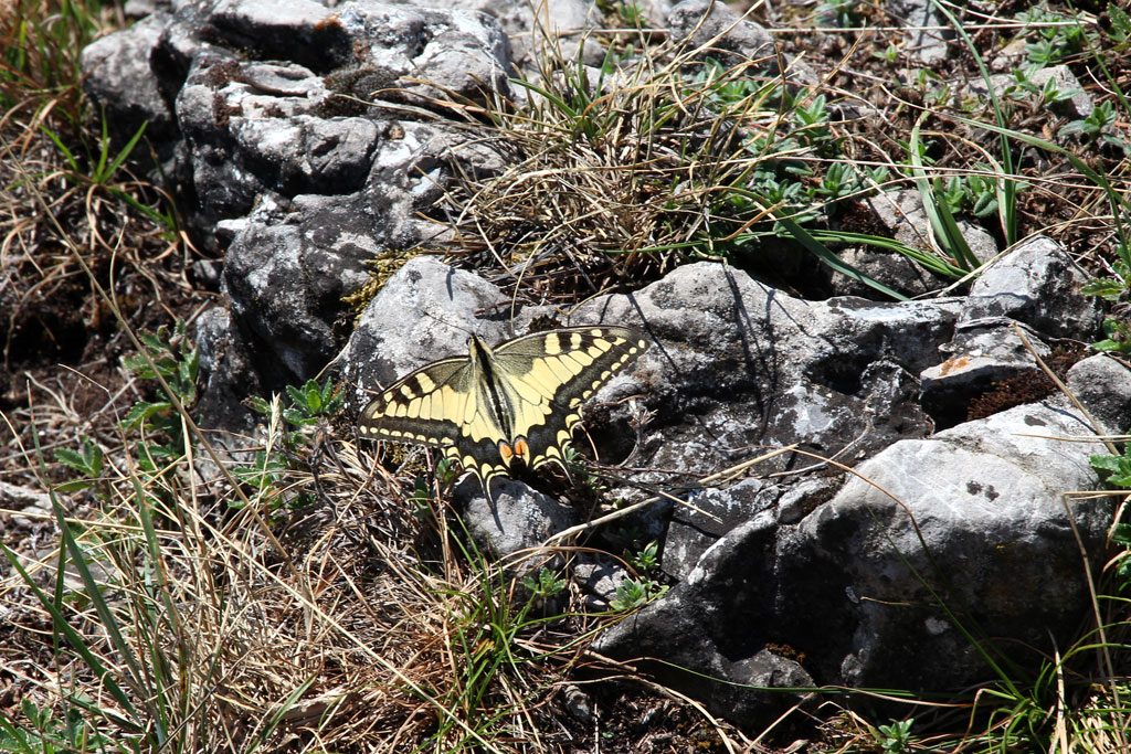 See in Italien – Schmetterling | SOMEWHERE ELSE