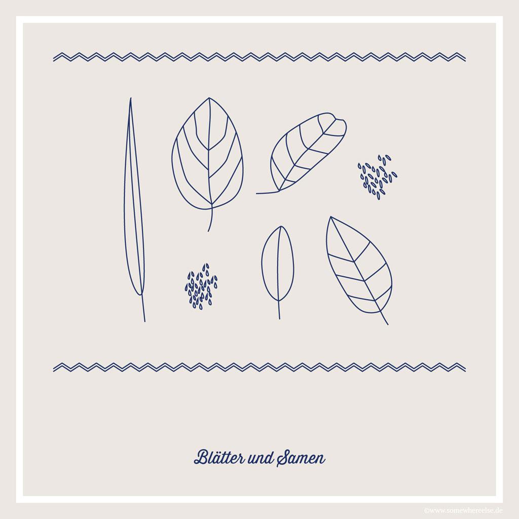 Blätter und Samen auf Siquijor | SOMEWHERE ELSE
