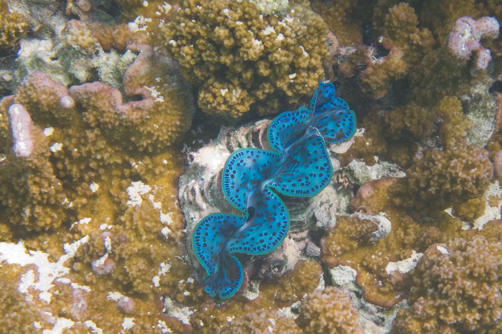 Cook Inseln Aitutaki – Schnorcheln mit Fischen in der Lagune | SOMEWHERE ELSE