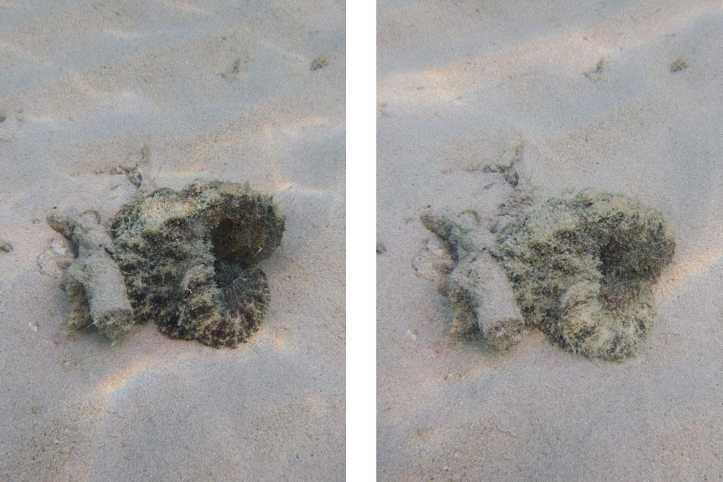 Krake vor Ko Kradan – Thailändische Inseln | SOMEWHERE ELSE