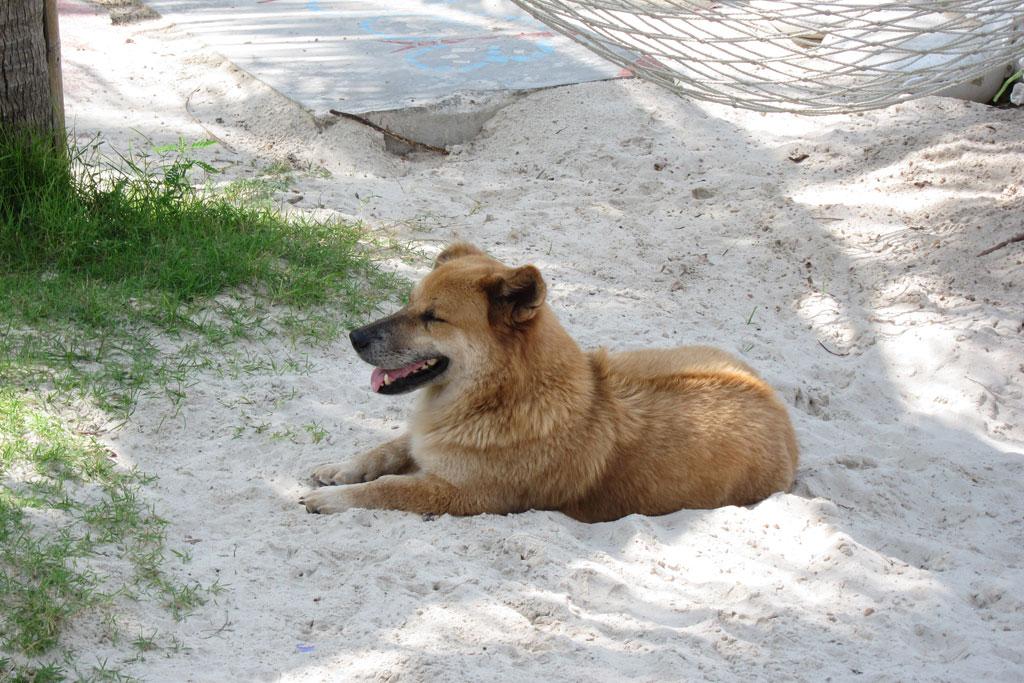 Unser Hund auf Ko Phangan – Thailändische Inseln | SOMEWHERE ELSE