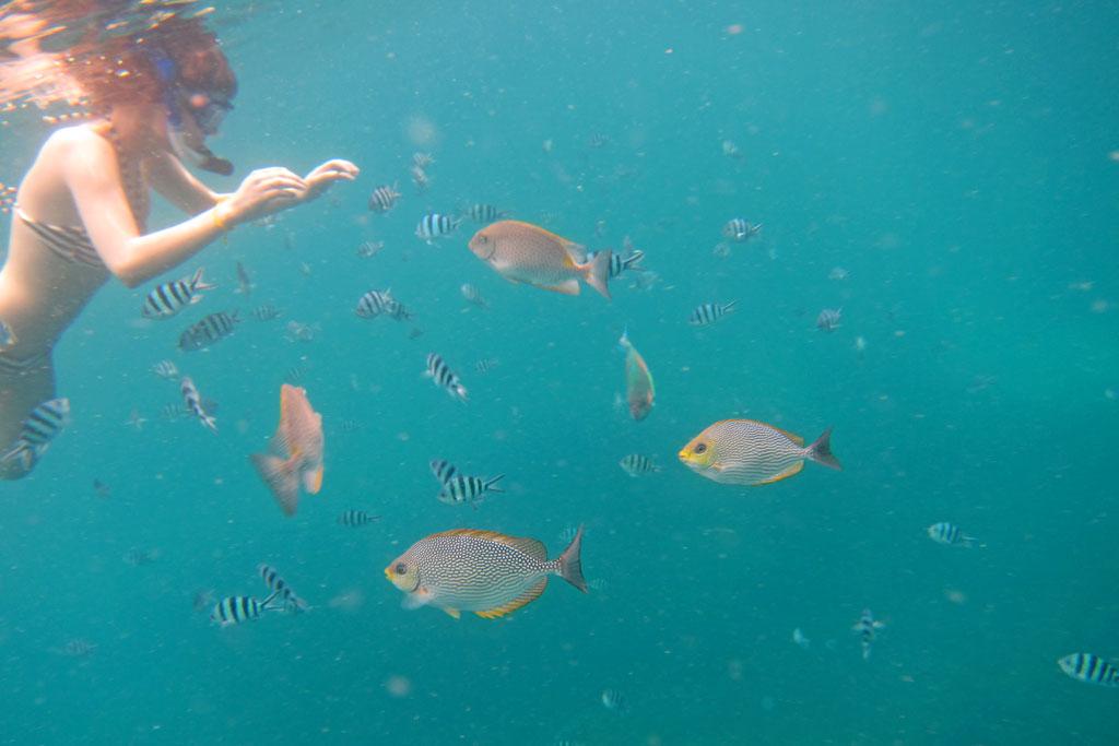 Schnorcheln vor Ko Tao – Thailändische Inseln | SOMEWHERE ELSE