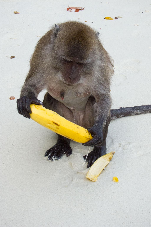 Auf dem Schnorchelausflug Affen füttern in der Monkey Bay – Thailändische Inseln | SOMEWHERE ELSE