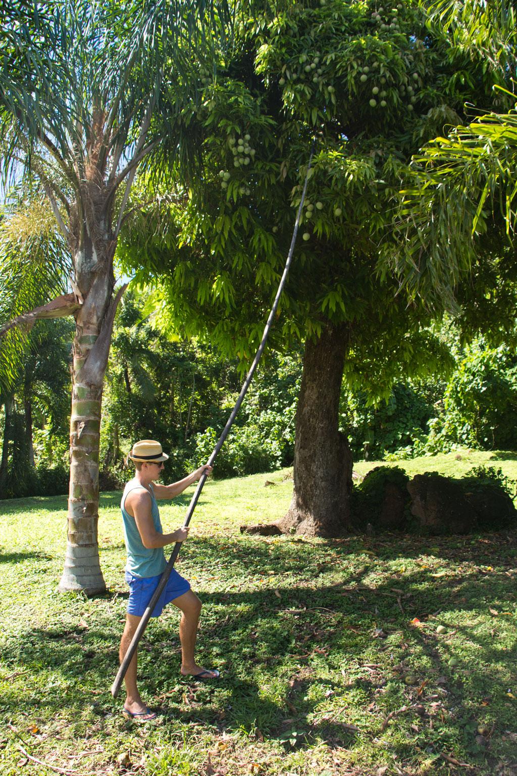 Aitutaki Lagoon Cruise – Mangoernte   SOMEWHERE ELSE