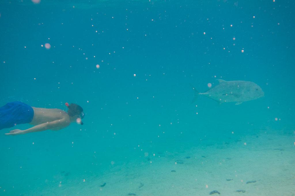 Aitutaki Lagoon Cruise – Schnorcheln   SOMEWHERE ELSE