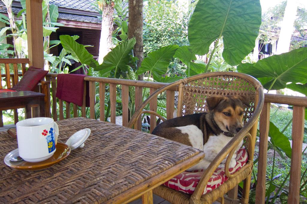 Laotische Küche – Frühstück im Garten | SOMEWHERE ELSE