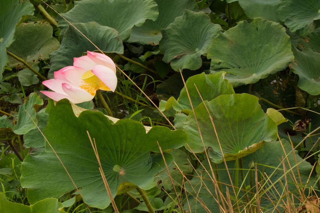 Leben in Kambodscha – Blüte im Grünen | SOMEWHERE ELSE