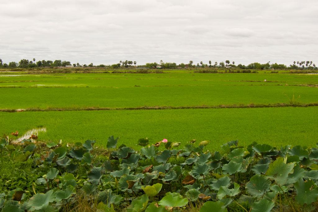 Leben in Kambodscha – Grüne Felder | SOMEWHERE ELSE