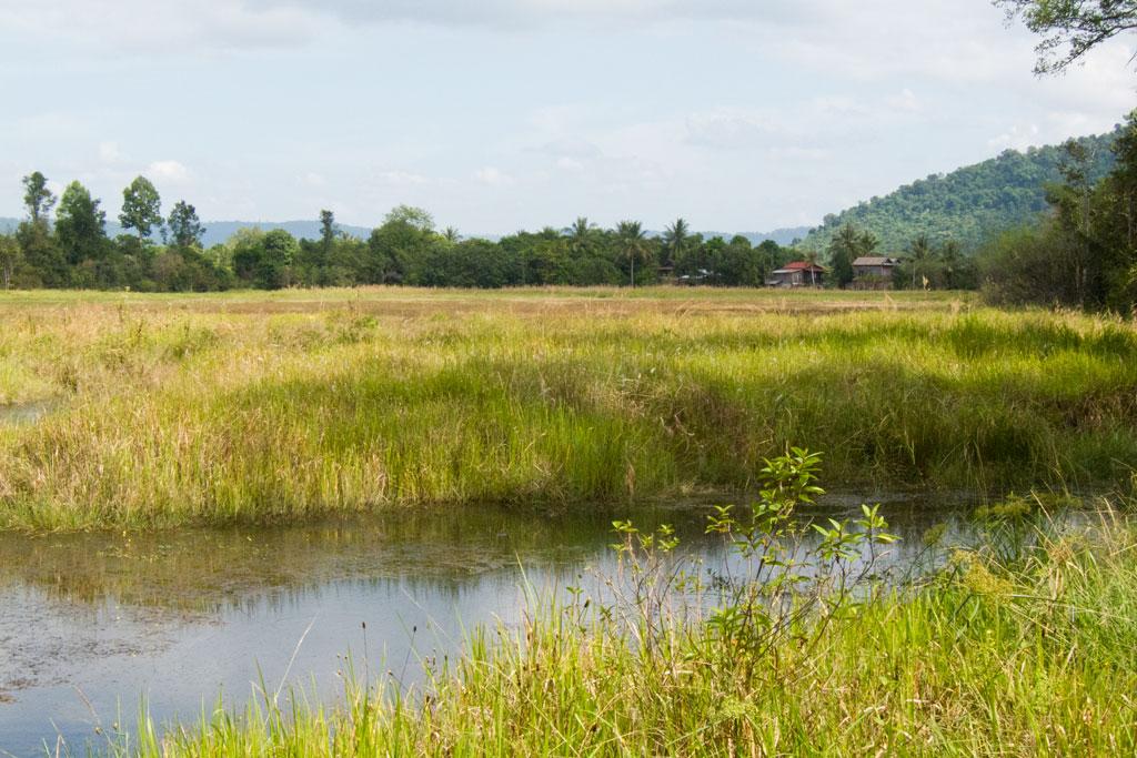 Leben in Kambodscha – Bach und grüne Felder | SOMEWHERE ELSE