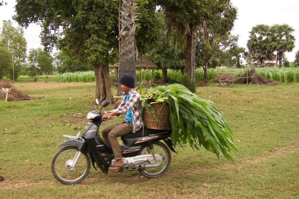 Leben in Kambodscha – Maisernte auf dem Motorroller | SOMEWHERE ELSE