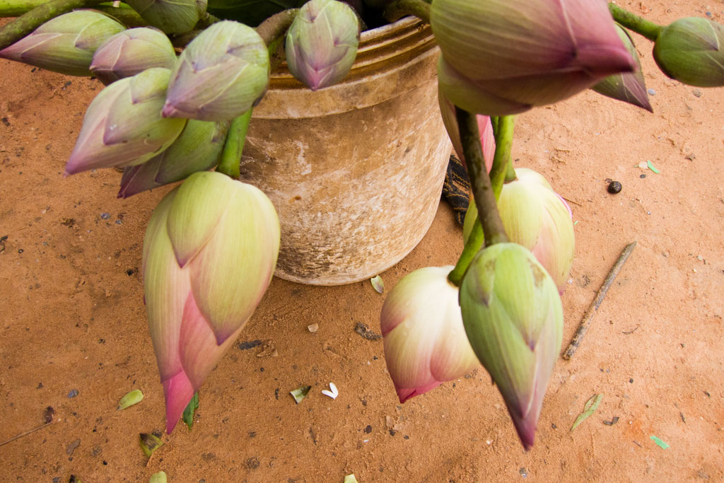 Leben in Kambodscha – Bananenblüten auf dem Markt | SOMEWHERE ELSE