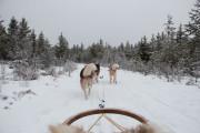 Mit Schlittenhunden durch Schwedens Winterlandschaft