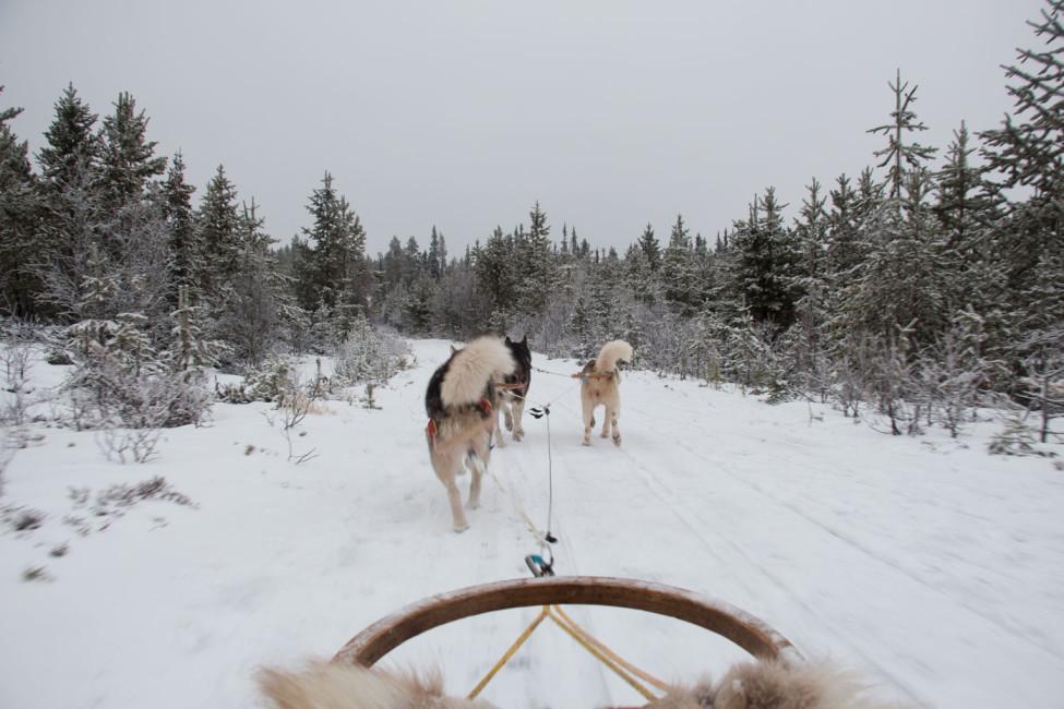 Mit Schlittenhunden durch Schwedens Winterlandschaft – Im Schlitten unterwegs | SOMEWHERE ELSE