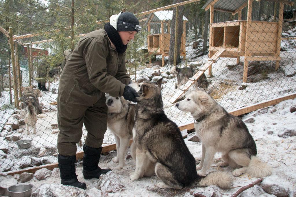 Mit Schlittenhunden durch Schwedens Winterlandschaft – Anfreunden mit den Hunden | SOMEWHERE ELSE