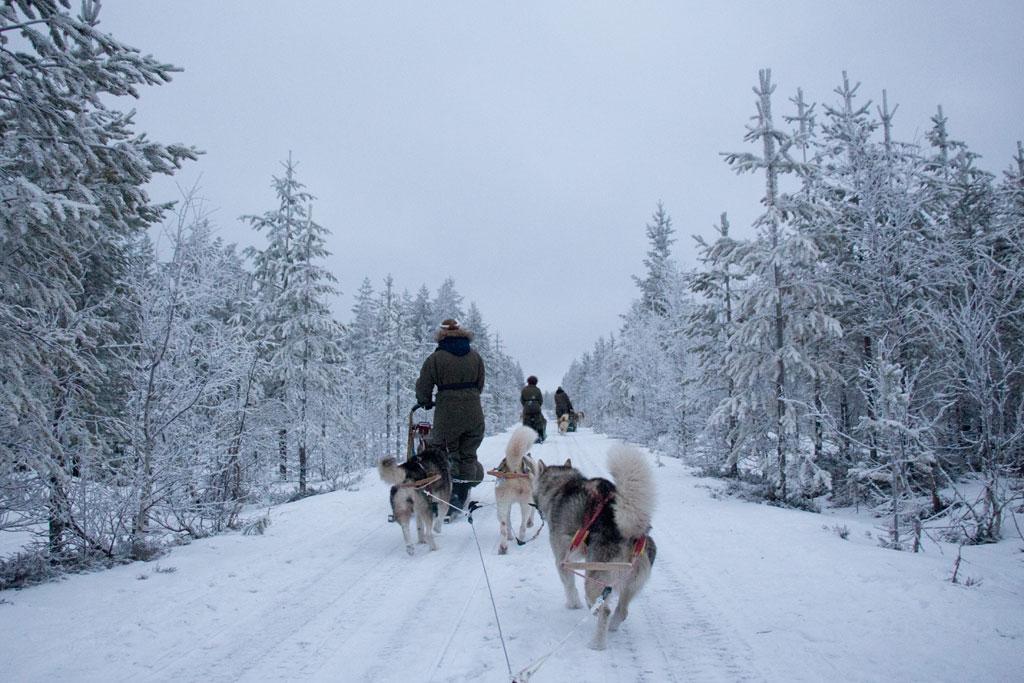 Mit Schlittenhunden durch Schwedens Winterlandschaft – Schlittenfahrt | SOMEWHERE ELSE