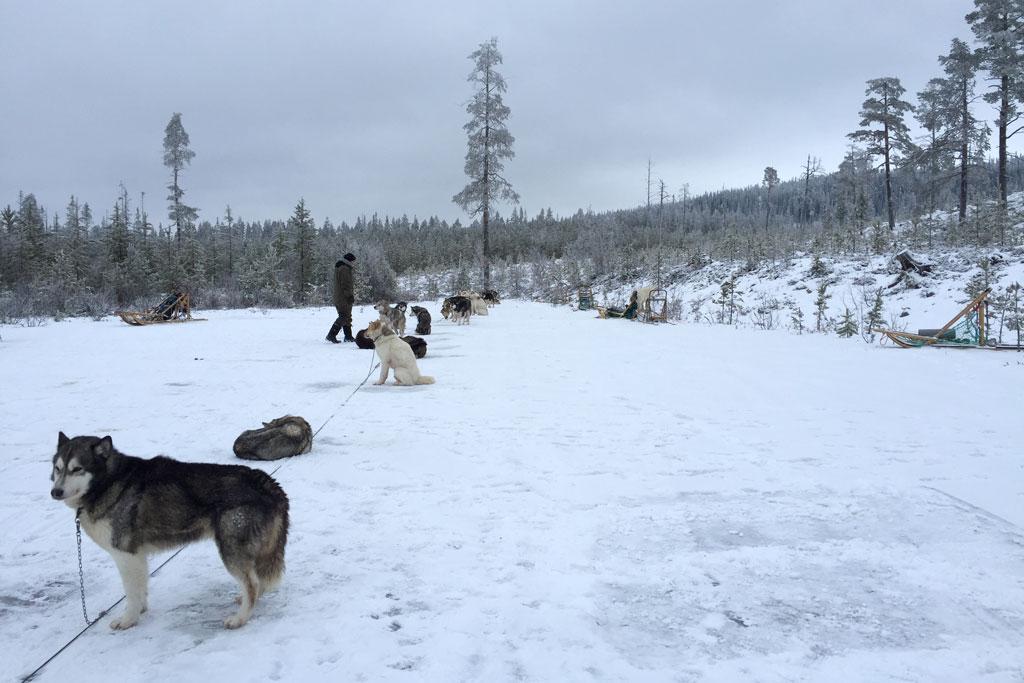 Mit Schlittenhunden durch Schwedens Winterlandschaft – Schlittenhunde im Outdoorcamp an der Leine | SOMEWHERE ELSE