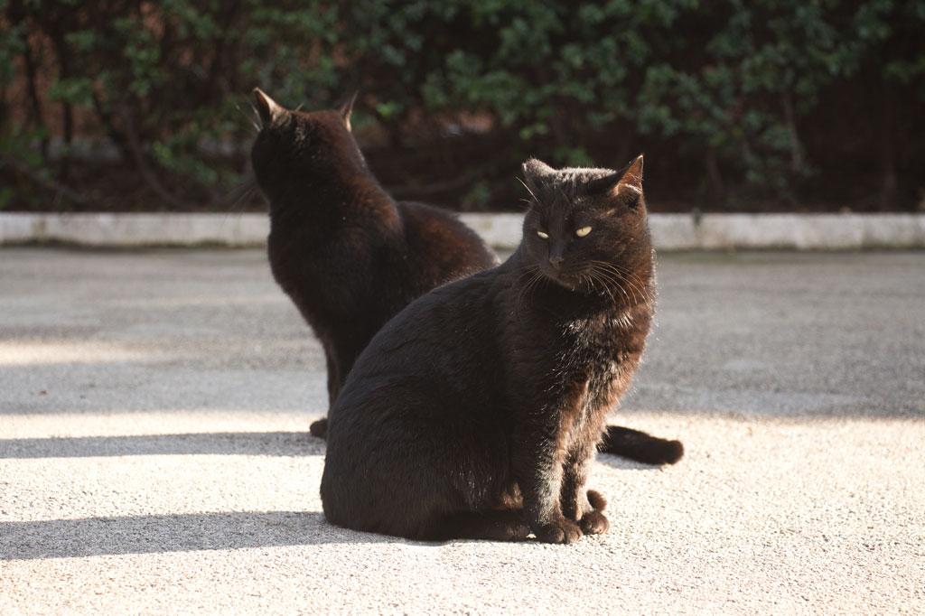 Testaccio Rom – Katzen auf dem Aventin | SOMEWHERE ELSE