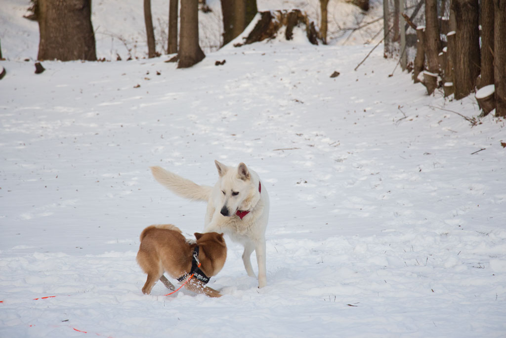 Winter in Oslo Stadtspaziergang Hunde im Schnee | SOMEWHERE ELSE
