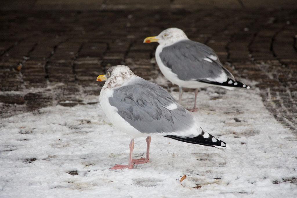 Winter in Oslo Stadtspaziergang Möwen | SOMEWHERE ELSE