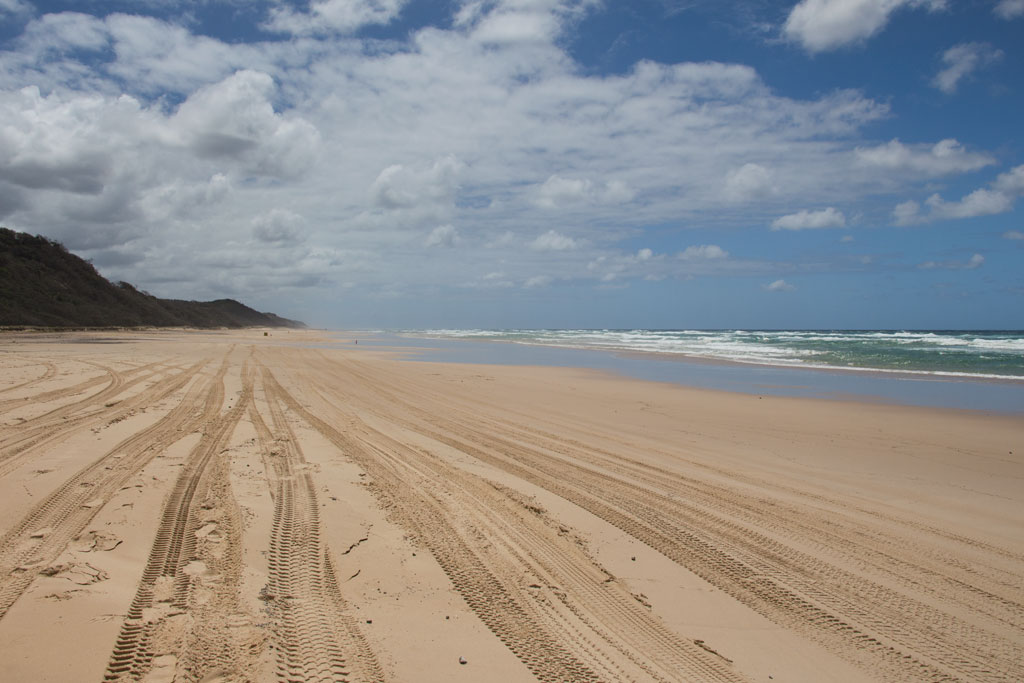 Australische Tierwelt – 75 Miles Beach auf Fraser Island | SOMEWHERE ELSE
