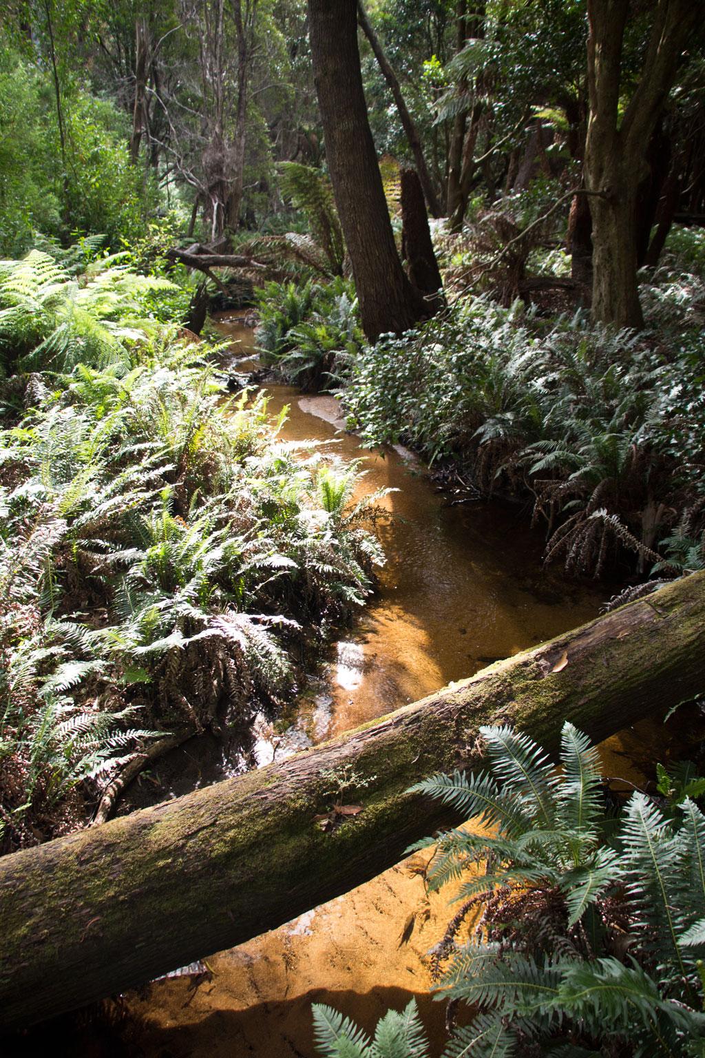 Australische Tierwelt – Lilly Pilly Gully Walk durch Regenwald im Wilsons Promontory Nationalpark | SOMEWHERE ELSE