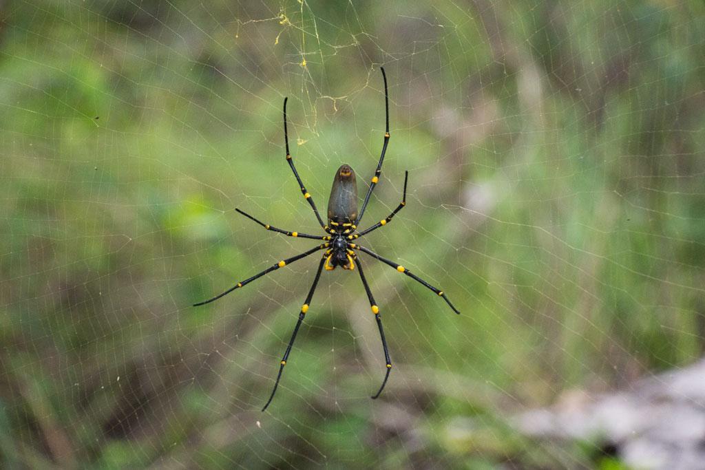 Australische Tierwelt – Spinne bei Airlie Beach | SOMEWHERE ELSE