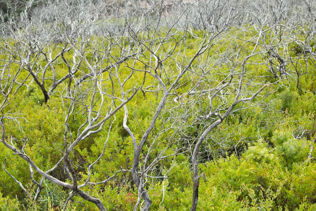 Australische Tierwelt – Bäume in der Whiskey Bay im Wilsons Promontory Nationalpark | SOMEWHERE ELSE