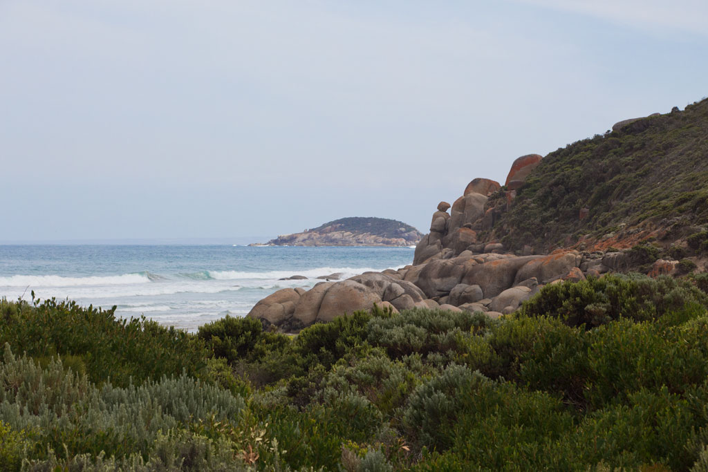 Australische Tierwelt – Whiskey Bay im Wilsons Promontory Nationalpark | SOMEWHERE ELSE