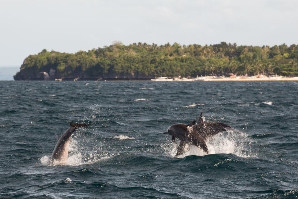 Pamilacan Island – Delfine springen und tanzen | SOMEWHERE ELSE