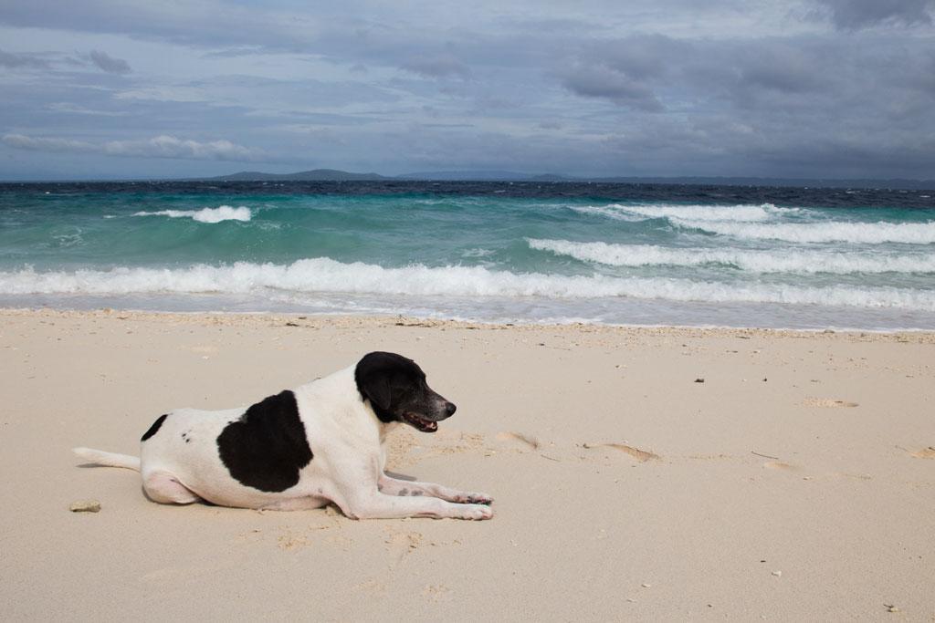 Pamilacan Island – Hund begleitet uns an Sandstrand | SOMEWHERE ELSE