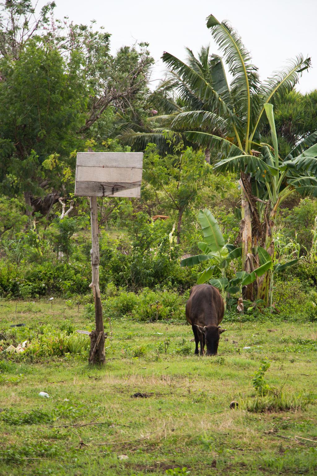 Pamilacan Island – Kuh steht neben Basketballkorb | SOMEWHERE ELSE
