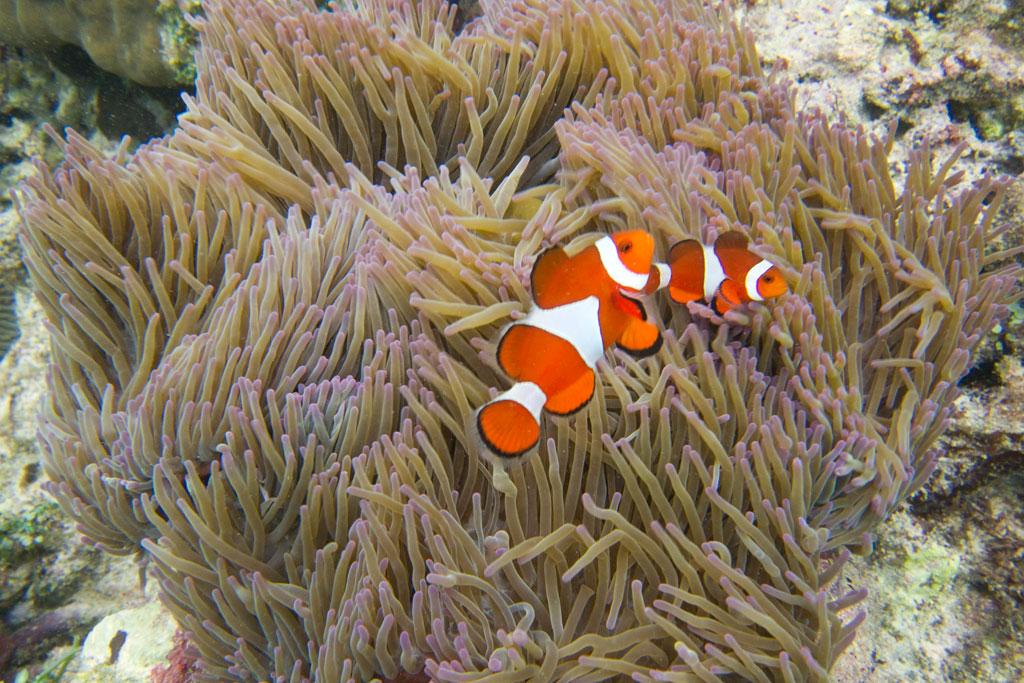Pamilacan Island – Schnorcheln im Korallengarten mit Clownfischen | SOMEWHERE ELSE