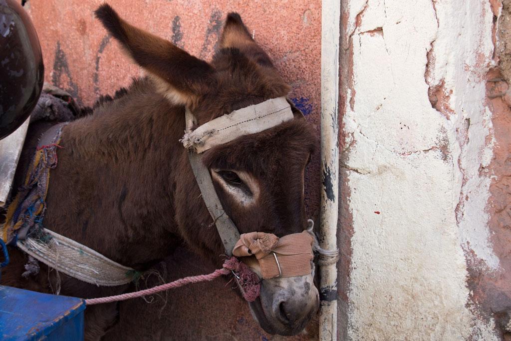 Marokko Trip –Marrakesch –Esel in der Medina |SOMEWHERE ELSE
