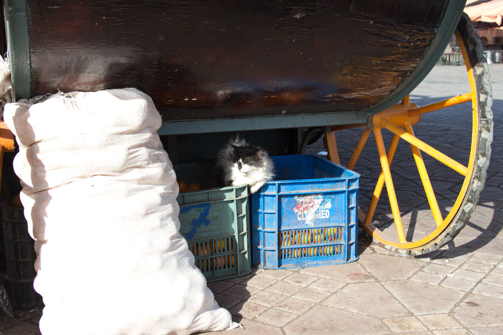 Marokko Trip – Marrakesch – Katze an Fruchtsaftstand | SOMEWHERE ELSE