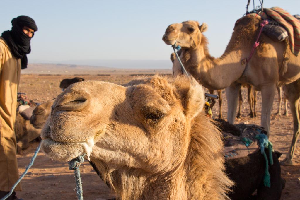Marokko Trip –Wüste von Zagora – Kamele und ein Berber |SOMEWHERE ELSE