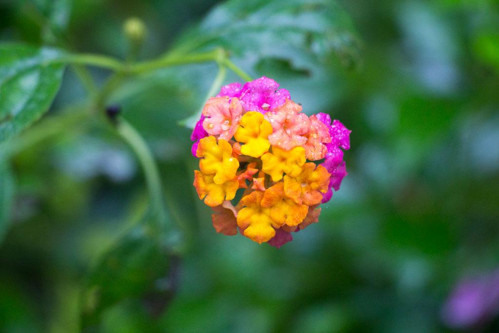 Philippinische Inseln – Blüte im Butterflies Conservation Center auf Bohol | SOMEWHERE ELSE