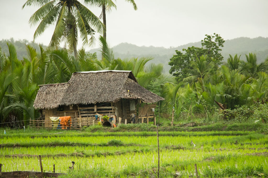 Philippinische Inseln – Reisfeld und Hütte auf Bohol | SOMEWHERE ELSE