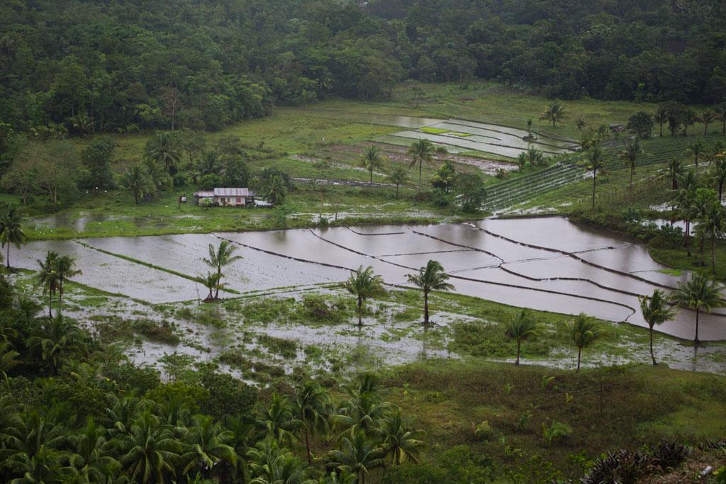Philippinische Inseln – Reisfelder auf Bohol | SOMEWHERE ELSE