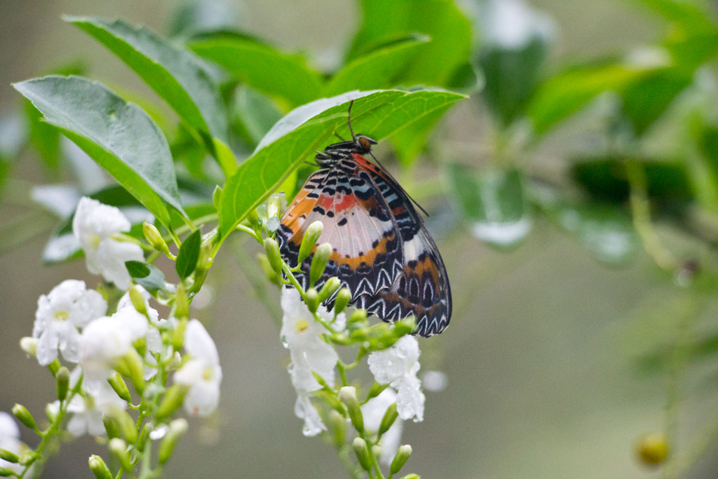 Philippinische Inseln – Schmetterling auf Bohol | SOMEWHERE ELSE