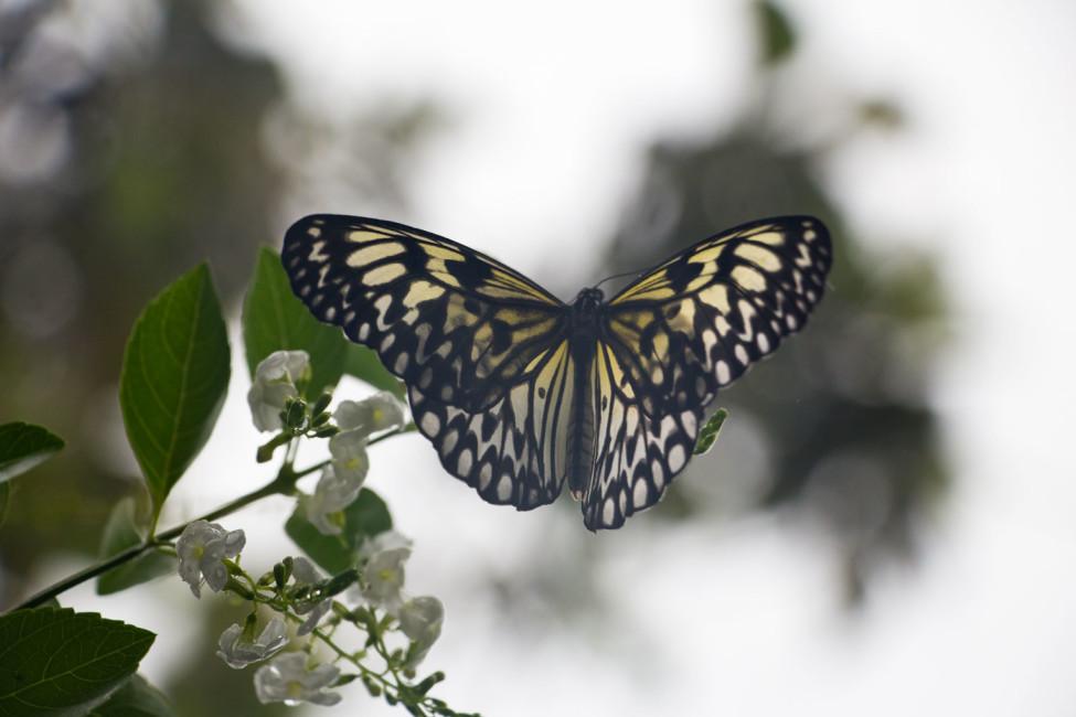Philippinische Inseln – Schmetterling auf Bohol | SOMEWHERE ELSE