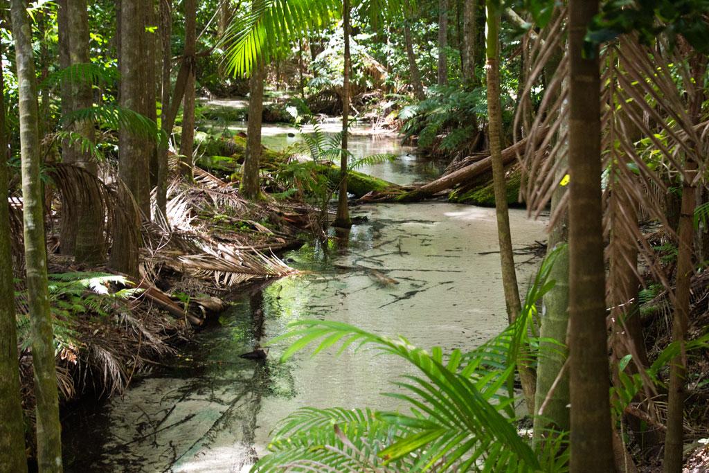 Tagesausflüge in Australien – Regenwald auf Fraser Island | SOMEWHERE ELSE