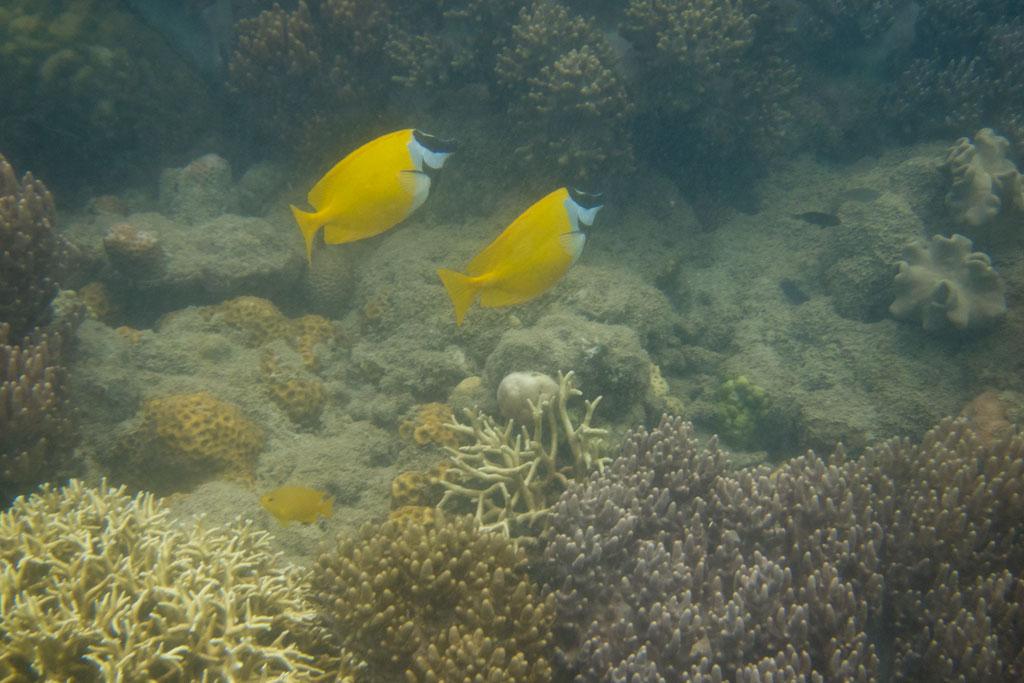 Tagesausflüge in Australien – Schnorcheln am Bali Hai und Langford Reef | SOMEWHERE ELSE