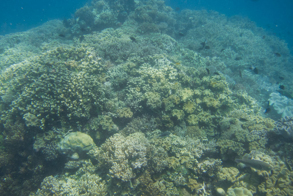 Tagesausflüge in Australien – Tauchen am Great Barrier Reef | SOMEWHERE ELSE