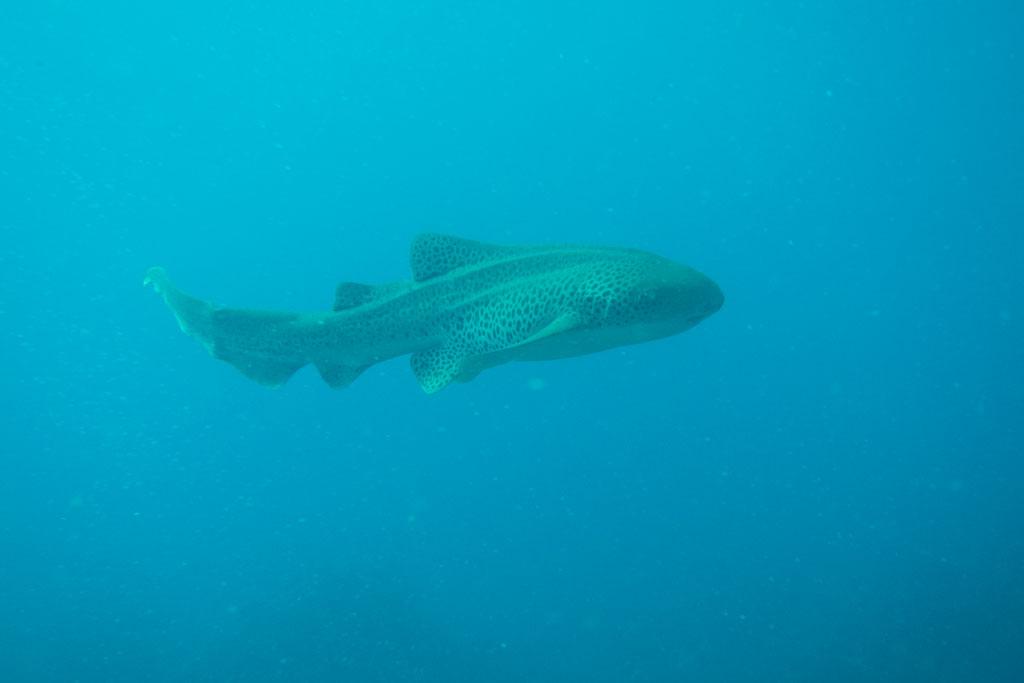 Tagesausflüge in Australien – Hai beim Tauchen an den Julian Rocks | SOMEWHERE ELSE