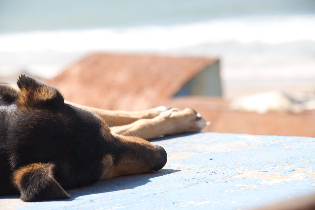 Taghazout Surfen – Hund am Strand | SOMEWHERE ELSE