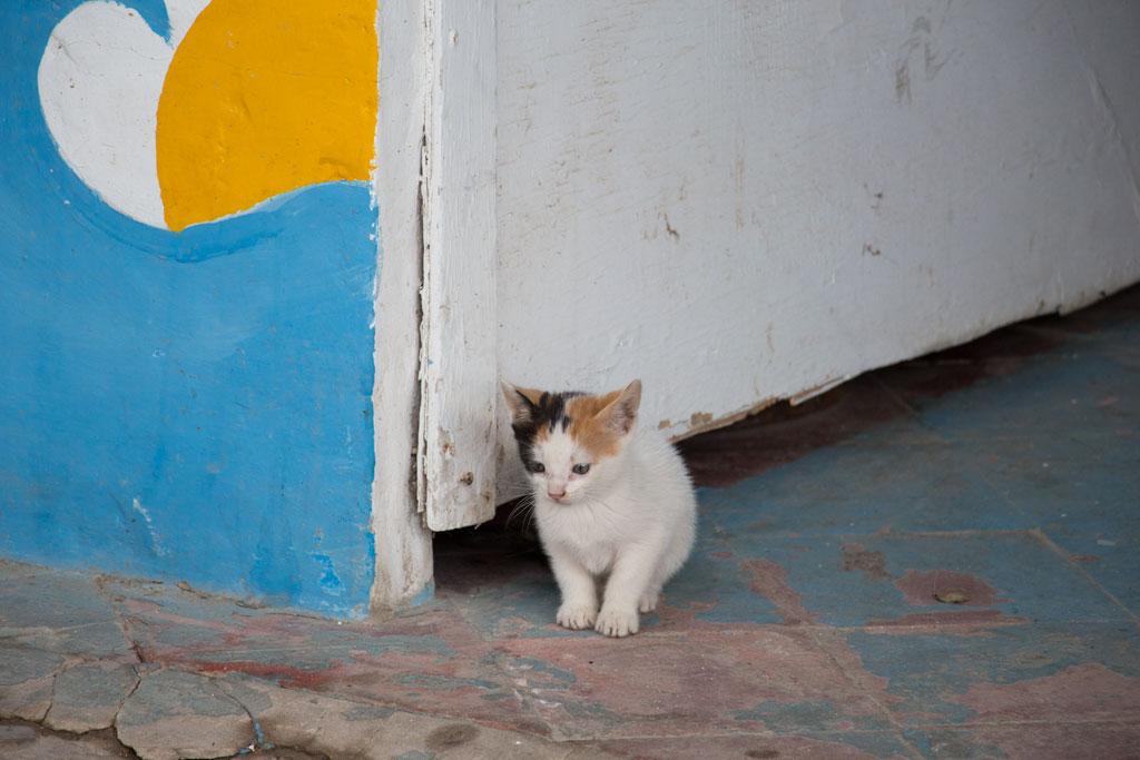 Taghazout Surfen – Kätzchen im Dorf | SOMEWHERE ELSE