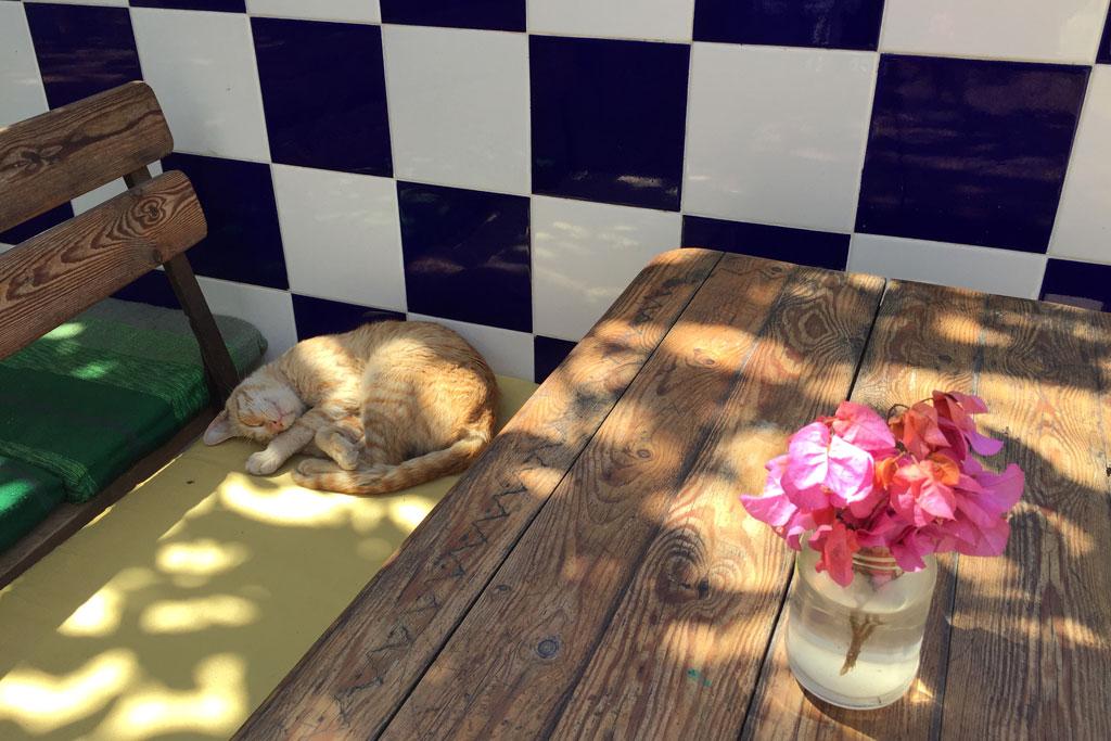 Taghazout Surfen – Auf einer Bank schlafende Katze | SOMEWHERE ELSE