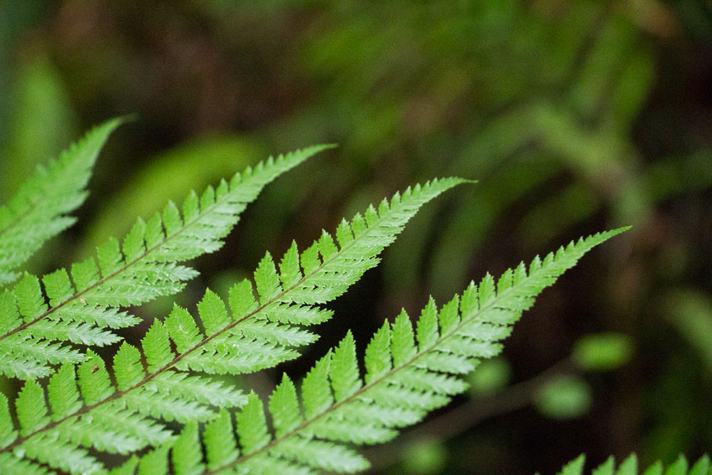 Neuseeland Südinsel Landschaften – Lake Matheson Farnblatt | SOMEWHERE ELSE